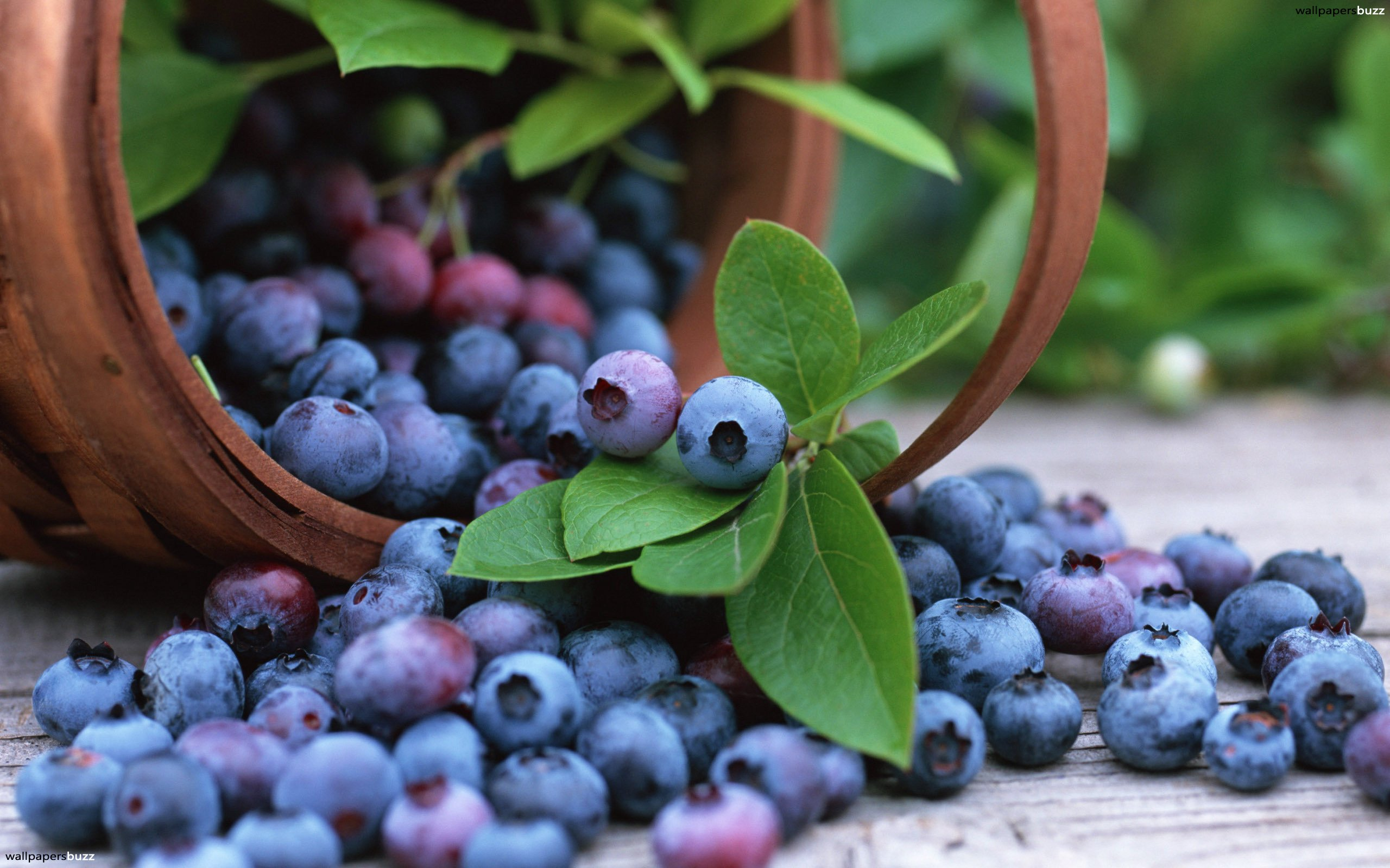 benefits blueberries