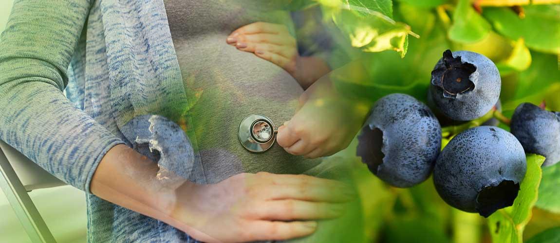 Blueberries Improve Fertility