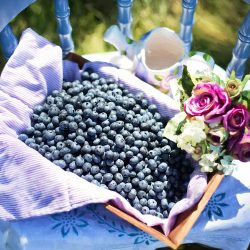Nutritive Facts About Blueberries