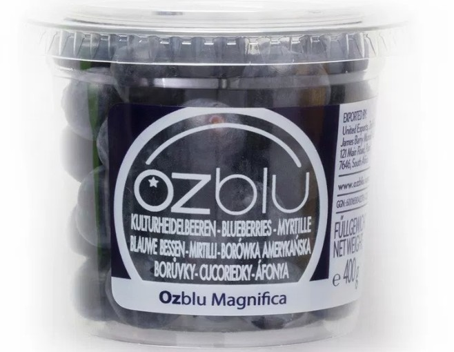 OZblu launches blueberry academy