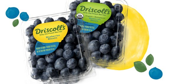 New sources crucial to better blueberries