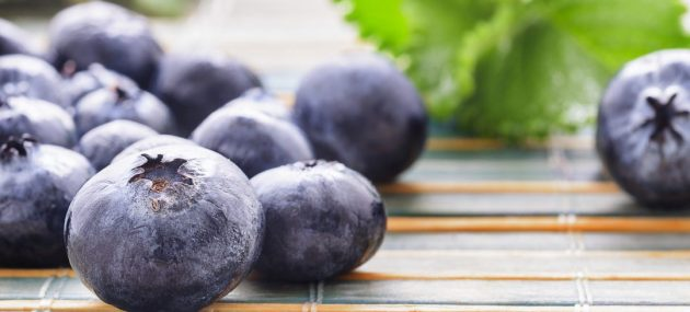 Polish blueberry conference explores challenges faced by the industry
