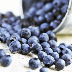 Why Blueberries are Coated in a White Powder