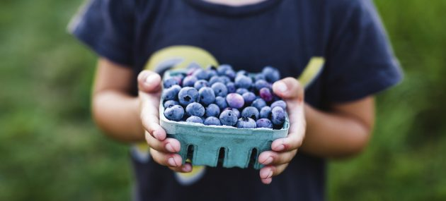 Is Blueberry The Way To Strong Memory?